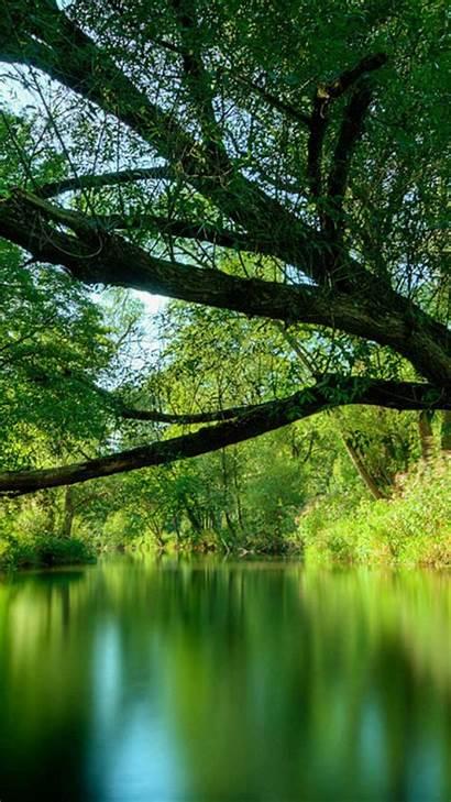 Forest Deep Lake Mobile Nature Wallpapers Desktop