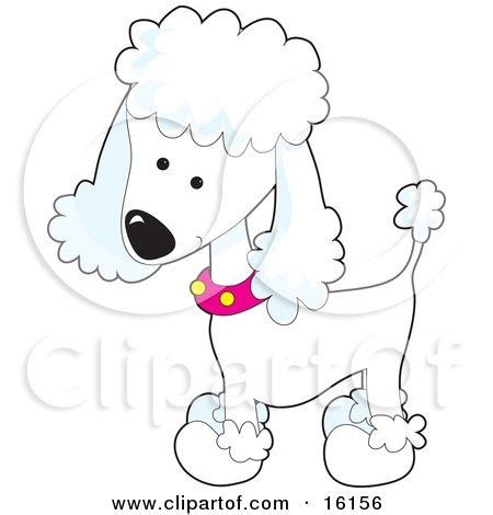 royalty  rf poodle clipart illustrations vector