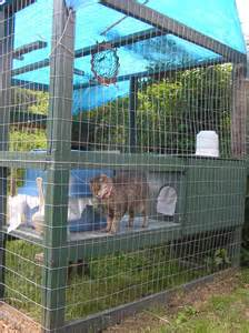 cat outdoor enclosure alley cat rescue inc an alliance for cat protection