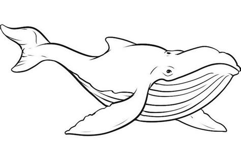 whale  animals printable coloring pages