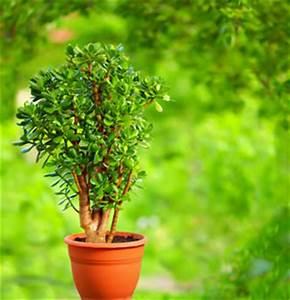 Pflege Von Bonsai Bäumchen : bonsai grundlagen von pflege und schneiden ~ Sanjose-hotels-ca.com Haus und Dekorationen