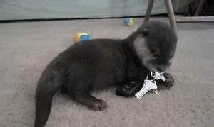 Animal Gifs Hug Cute And Hilarious Animal Gifs Funny ...