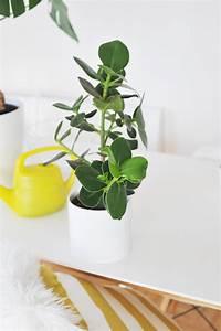 Pflegeleichte Pflanzen Für Die Wohnung : best gr npflanzen f r die wohnung gallery ~ Michelbontemps.com Haus und Dekorationen