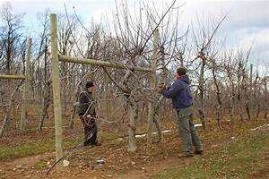 Stony Hill Farms Csa  Apple Tree Pruning