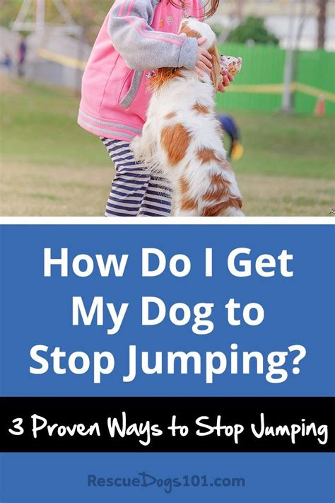 How To Stop My Puppy Jumping On The Sofa by How Do I Get My To Stop Jumping Rescue Dogs 101