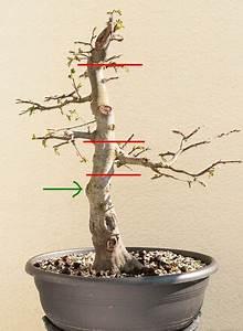 Wann Schneidet Man Hortensien Zurück : wann man einen bonsai am stamm schneidet oder s gt kert szet pinterest ~ Eleganceandgraceweddings.com Haus und Dekorationen