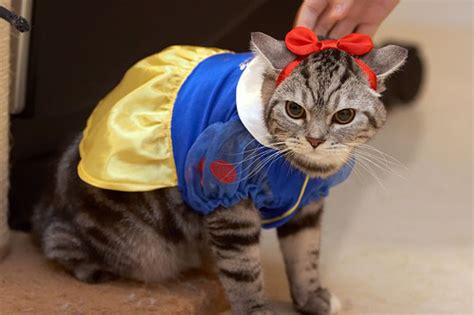 funny pet costumes halloween  dogs  cats
