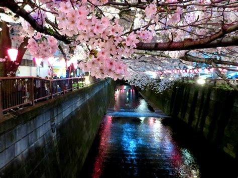 Cherry Blossom 2019 Forecast