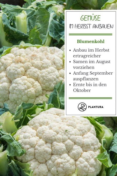 Herbst Anbau Garten by Gem 252 Se Im Herbst Anbauen Die 10 Besten Pflanzen F 252 R Die