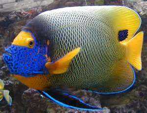 poisson de mer aquarium xanthometapon