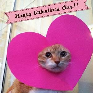 19 Cats That Are Really Tired Of Their Owner's Valentines ...