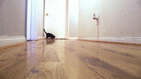 fast furriest tokyo drift cute cat gifs