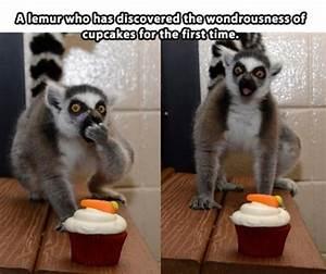 Lemur Cupcake Cute Lemur Quotes