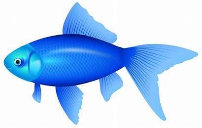 Fish Clipart Cliparts Clip Clipartion Graphics