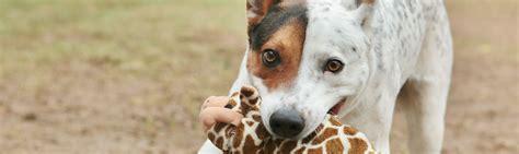 report animal abuse arizona humane society