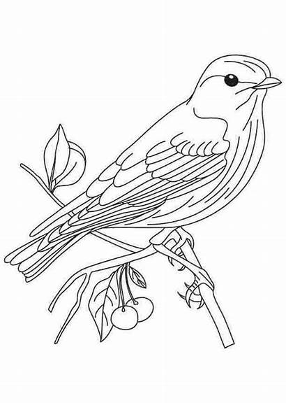 Coloring Bird Pages Printable