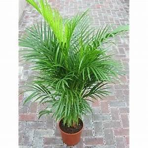 Plante Verte D Appartement : plante verte interieur ~ Premium-room.com Idées de Décoration