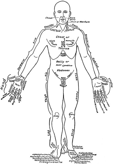 front view   parts   human body labeled