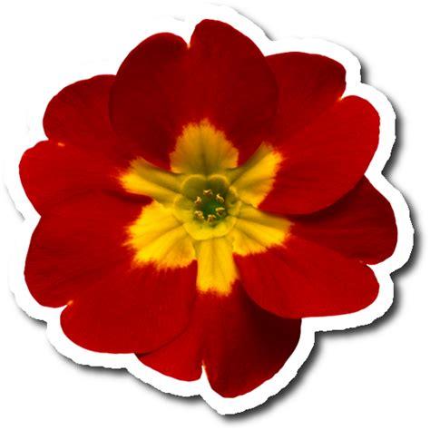 zoom diseno  fotografia stickers flowersflorespngscrap