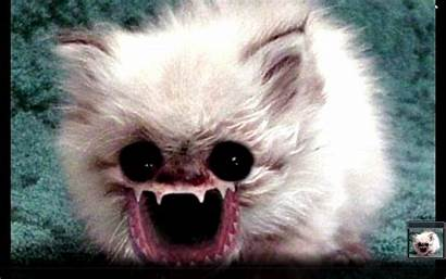 Ugly Animal Dog Ugliest Cat Wallpapersafari Viewing
