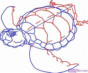 Step 4. How to Draw a Sea Turtle