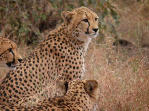 turisti per caso sudafrica perle d africa viaggi vacanze e turismo turisti per caso