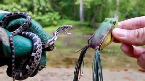 live bait vs artificial lures fishing experiment snake vs frog vs worm