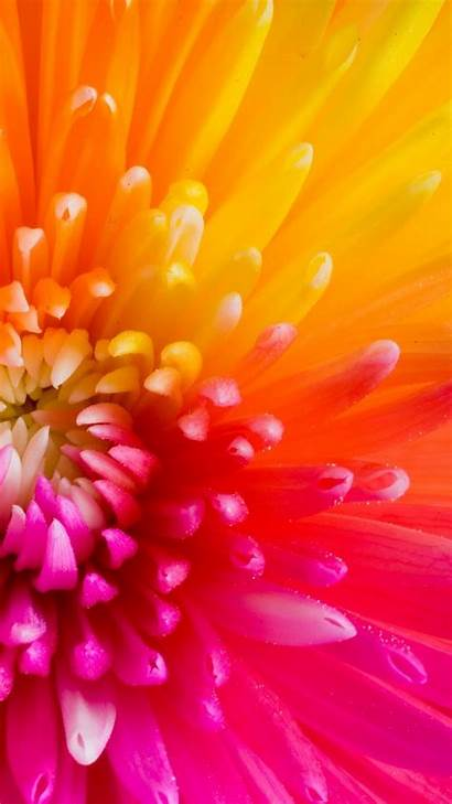 Colorful Wallpapers Flower Flowers Iphone Tropical Plus