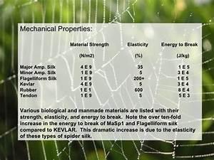 Elasticity Formula Spider Silk