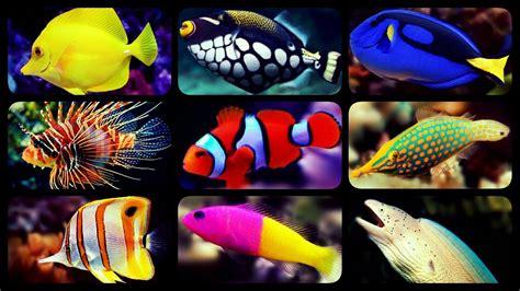 types  saltwater aquarium fish coral reef tank fish