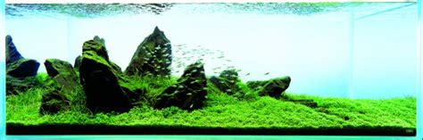 Amano Aquascape by Let 180 S Start With Q Sansui Iwagumi By Amano Aquascaping