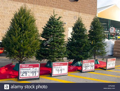 different types of christmas trees for sale stock photo