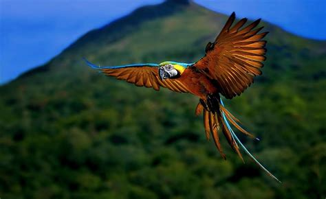National Geographic Animal Hd Wallpapers - nature animal bird national geographic forest hd