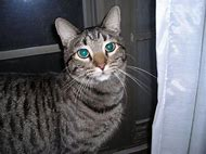 My Cat Died Yesterday