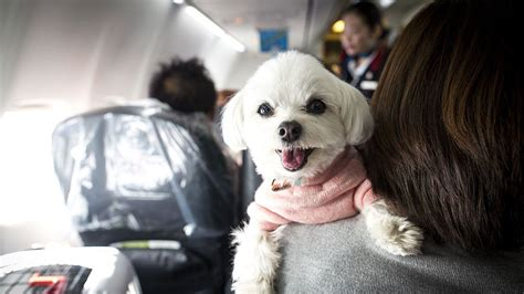 airlines  cracking   emotional support animals