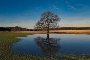 Baum Am Wasser : baum am t mpel foto bild sonstiges wasser im detail ~ A.2002-acura-tl-radio.info Haus und Dekorationen