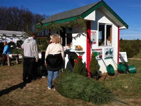 christmas tree farms in carroll county westminster md patch
