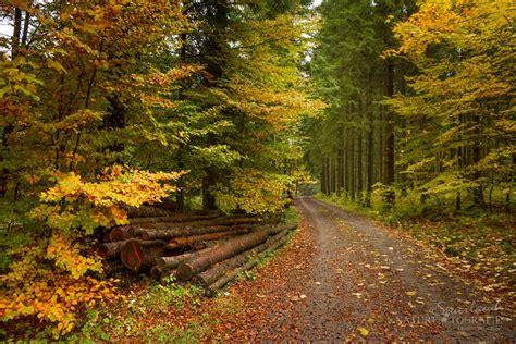 herbstwald sauerland naturfotografie