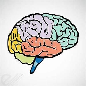 Human Brain, free vectors - Clipart.me