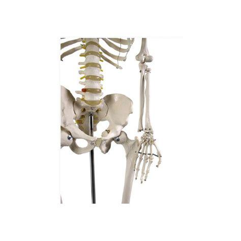 ustensiles de cuisine induction acheter squelette humain 180cm achat squelette du corps