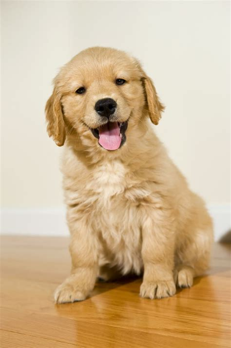 A List Of Dog Breeds That Are Good With Kids Know Whos