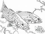 Fishing Coloring Pole Pages Bass Largemouth Rod Pro Fish Printable Getdrawings Getcolorings sketch template