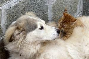 pet cats and dogs carry the mrsa superbug