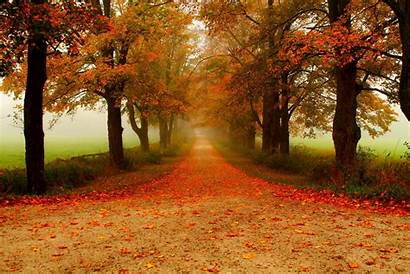 Path Road Autumn Lined Tree Fall Background