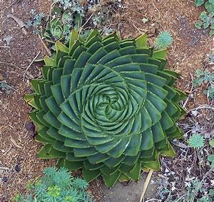 20+ Photos Of Geometrical Plants For Symmetry Lovers ...