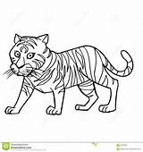 Tiger Coloring Cute Cartoon Vector Illustration Clipart Colored Preview sketch template