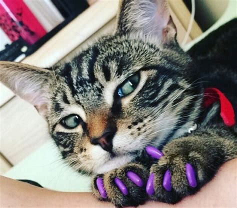 cover for cats colorful nail covers that make your pets look like they