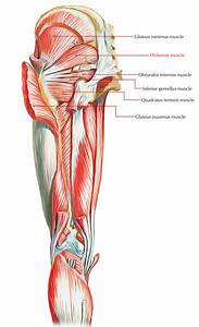 Easy Notes On  U3010muscles Of The Pelvis U3011learn In Just 6