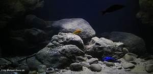 Aquarium Bodengrund Berechnen : malawi malawisee aquarium 660 l ~ Themetempest.com Abrechnung