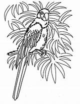 Parrot Coloring Pages Bird Tropical Realistic Hawaii Female Beach Colouring Parrots Printable Grown Ups Getcolorings Template sketch template
